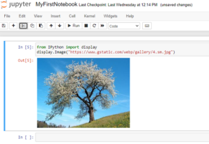 insert add embed image in jupyter notebook from image URL